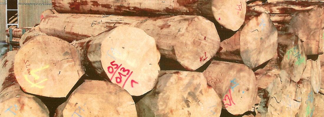 Starkholz – ein Problem für Deutschlands Holzindustrie?
